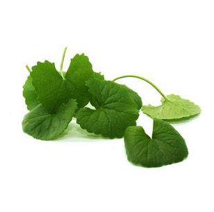 centella asiatica extract