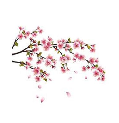Japanese cherry extract